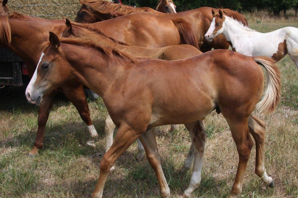79XFoal